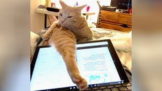 These CATS are the FUNNIEST THING YOU'LL SEE THIS WEEK - Get ready to CRY WITH LAUGHTER!