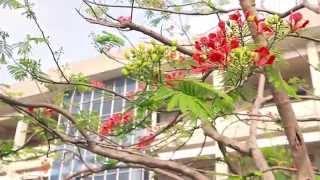 Kỉ niệm tuổi  học trò 12A7  - THPT Nguyễn Trãi