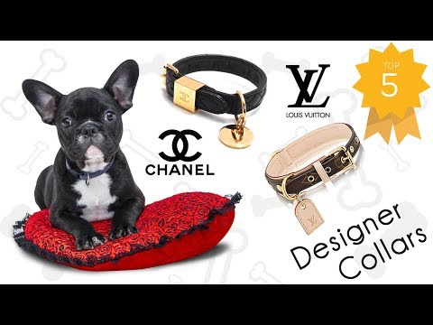 Top 5 Designer Accesories for you Pet