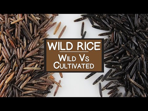 Nutritional Benefits of Wild Rice, A