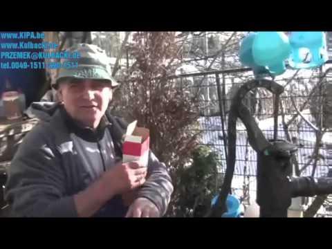 INFORMACJA KULBACKI RACING PIGEON STUD- Hodowla Gołębi Sportowych!