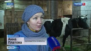 В Усть-Заостровке живут самые счастливые коровы в Сибири