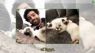 527 Breaking News   Mo Salah weighs in on cats and dogs row
