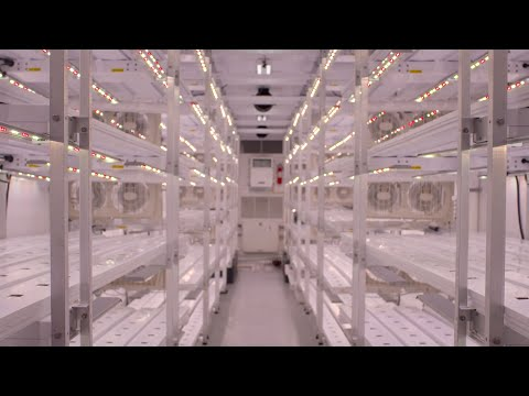AmplifiedAg's vision is to create a global network of indoor farms, influencing the evolution of indoor agriculture and providing safe food to people across the planet.