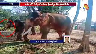 Selfie with Elephant Goes Wrong..