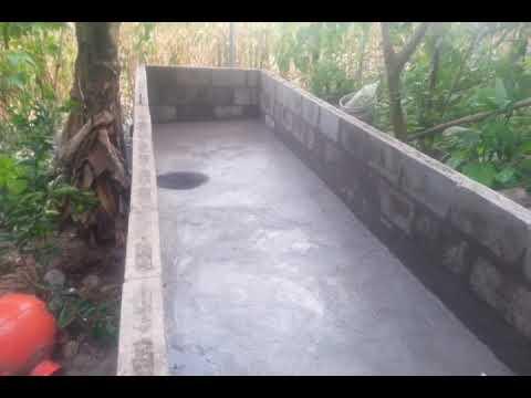 Criadero o crianza de tilapia o mojarra en un estanque for Como oxigenar el agua de un estanque sin electricidad