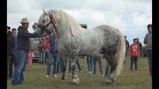 Targ de cai in cadrul expozitiei Ruseni, Satu Mare 23 Iunie 2018