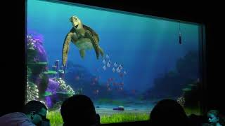 WATCHING THE SHOW TUTRLE TALK WITH CRUSH INSIDE THE LIVING SEAS PAVILLON IN WALT DISNEY WORLDS EPCOT