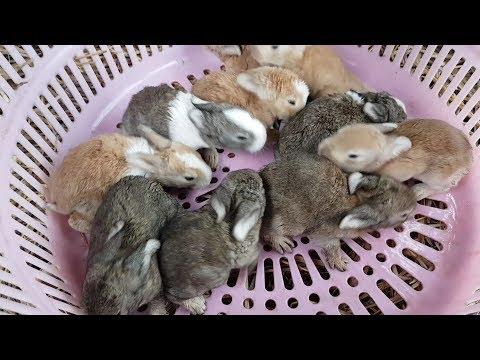 귀여운 아기토끼(rabbit)가 드디어 눈을 떴습니다.