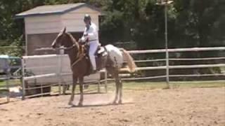 2010 Shasta District Fair 4-H Horse Show