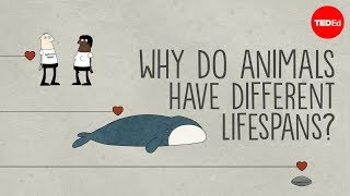 Why do animals have such different lifespans? - Joao Pedro de Magalhaes