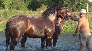 Caii lui Nea' Costel de la Cluj ep. 54 Nea' Costel la apa, la propriu nu la figurat
