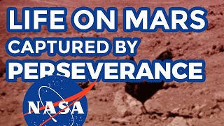 Life on Mars: real uncut NASA footage by Perseverance rover displaying life form on mars