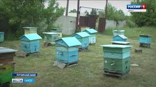 Омские пчеловоды жалуются на массовую гибель пчел