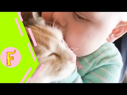 Baby and Cat Fun and Fails - Funny Baby Video