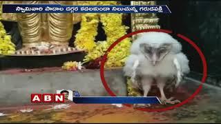 Viral: Eagle spotted inside at Korutla Venkateswara Swamy ..