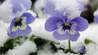 Early Spring Snowfall ('Russian Folk' Music - Melancholy Piano)