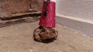 Putting Tiny Hats On A Toad