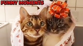 FUNNY ANIMALS 😻🐶😁FUNNY  MOMENTS WITH ANIMALS 🤣😂😍 - 58