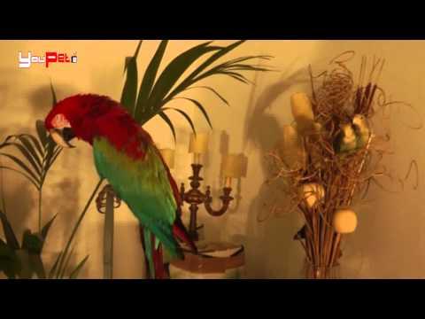 C'era una volta... il pappagallo