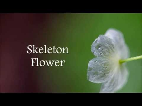 산하엽 (Skeleton Flower) - Kim Jonghyun [english lyrics]