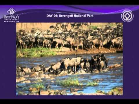 Bestway Tours Webinar: East Africa Wild Game Safari