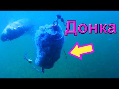 изготовление планктона для ловли толстолобика своими руками