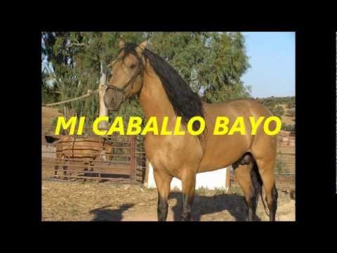 CHAMAME MI CABALLO BAYO TONY GAMARRA.wmv