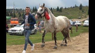 Concurs cu cai de frumusete     Maguri, Cluj 12 august 2018