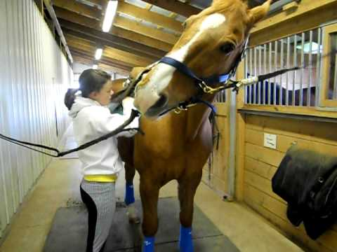How To Tack Up A Horse Youtube
