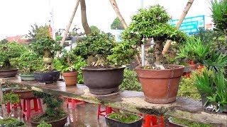 Chủ tịch thốt lên cây gì đây mà  đẹp thế, giá tiền em nó ntn - selling beautiful bonsai trees