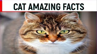 CAT AMAZING FACTS l FACTS ABOUT CATS l 25 INTERESTING FACTS ABOUT CATS