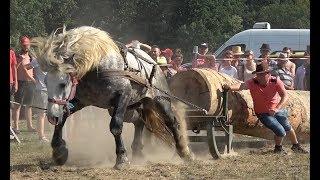 Concurs cu cai de tractiune - proba speciala - Negresti Oas, Satu Mare 4 august 2018