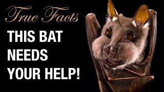True Facts: Help The Bats!