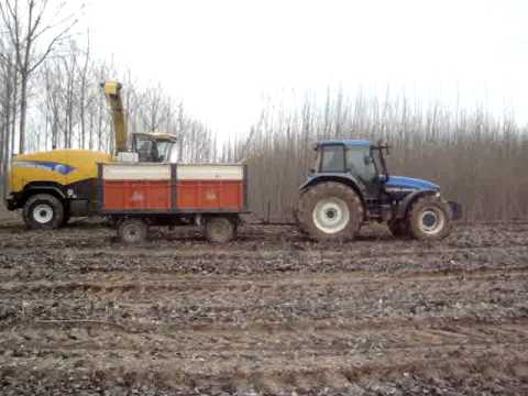 low yield poplar harvesting trials