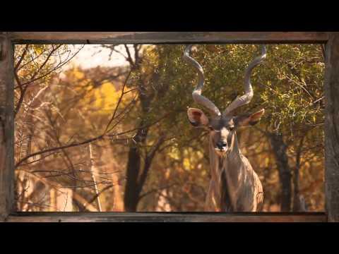 Kudu - African Sky