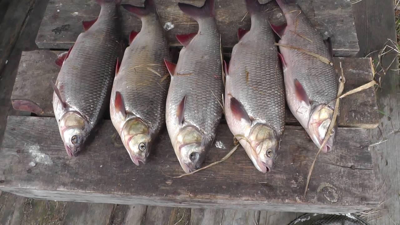 Прогноз клева рыбы: Ханты-Мансийский автон, Междуреченский