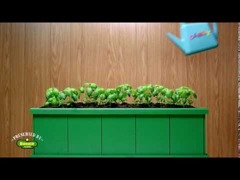 Reliable Garden Advice - Bonnie Basil