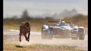 Drag Race: Formula E Car vs Cheetah
