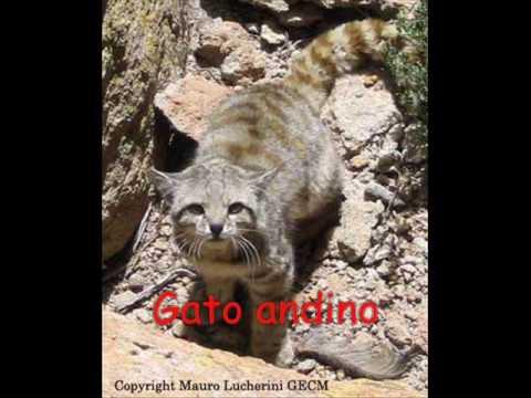 Animales del Perú en peligro de extincion - YouTube