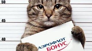 Как кота не