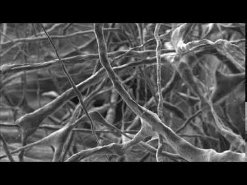 Symbios Collagen Membrane SR