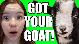 OMG I'VE GOT YOUR GOAT! Official Video | Babyteeth More!