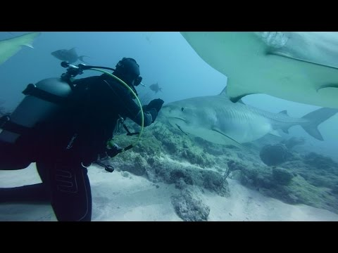 GoPro VR BTS: Diving with Sharks