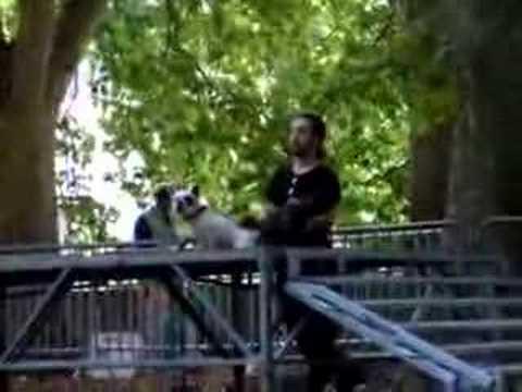 Manifestation canine Besancon