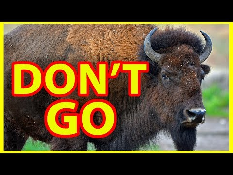 Why NOT to Visit Yellowstone National Park -- DON'T GO !!!!!!