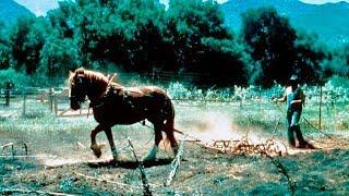High Lonesome   Classic WESTERN Movie   English   Free Film in Full Length   Cowboy Film