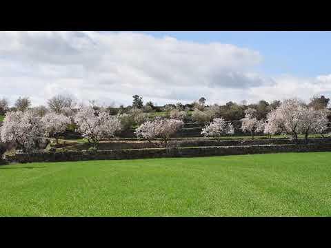 Passejant pels ametllers florits de la Segarra