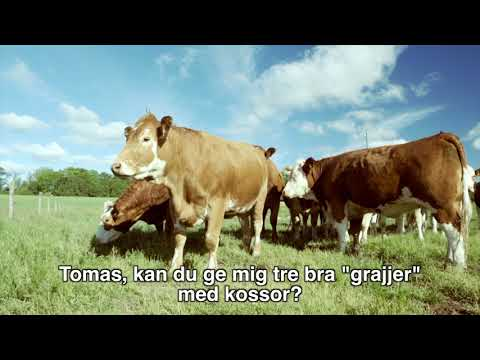 Go flexitarian - Nina träffar en bonde