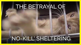The Betrayal of 'No-Kill' Sheltering